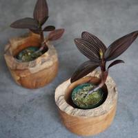 アネクトキルス ウッド鉢カバー セット 観葉植物 グリーン インテリア 新生活