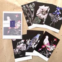 【ゆめまぼろし】 ポストカード6枚set『ゆめ』