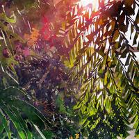 [INDONESIA] Mandheling Blue Batak -Sumatran- (100g)