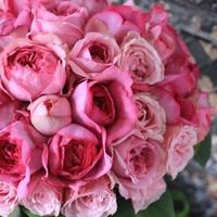 薔薇の花束100本