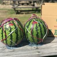 【7/20〜8/10】農園ビギン(小千谷市)さんのスイカギフト 2Lサイズ2個入り