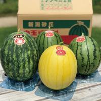 【7/1〜販売】斉藤雅一さんの 小玉スイカ4個 味くらべギフト