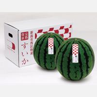 【7/14〜7/ 26】つよしファーム(西区)さんの潮風農法スイカギフト 2Lサイズ2個入