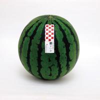 【7/13〜7/31】つよしファーム(西区)さんの潮風農法スイカギフト Lサイズ2個入り