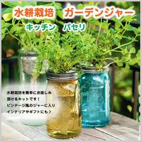 水耕栽培 パセリ ガーデンジャー キッチン 瓶 贈り物 単品 簡単栽培 ガーデン