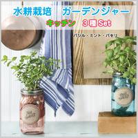 水耕栽培 ハーブ ガーデンジャー キッチン バジル ミント パセリ 3本セット 先行販売 プレゼント 簡単 HB