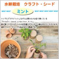 水耕栽培 ミント クラフト キッチン 贈り物 単品 簡単栽培 ガーデニング  料理  植え替え ハーブ