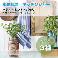 水耕栽培 ハーブ ガーデンジャー キッチン バジル ミント パセリ 3種類 プレゼント 簡単 HB