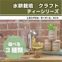 水耕栽培 クラフト・シード・スターターキット ティーシリーズ 3種類 ハーブ ミント レモンバジル ビーバーム プレゼント 簡単 HB