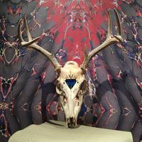 Deer  Art  Skull