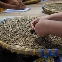 インドネシア : マンデリン ビンタンリマ(深煎り)200g