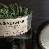 タルティーヌで共に選ぶよ愉しむよ多肉寄せ植え缶 10