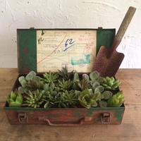 多肉の寄せ植え用のアイアンのツールボックス