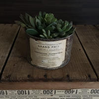 POTTED GARDEN 4