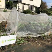 【E-MYFARM 区画No. 006】東京都世田谷区 きたからすやま農園野菜栽培区画