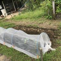 【E-MYFARM 区画No. 031】東京都足立区 いこうファーム野菜栽培区画