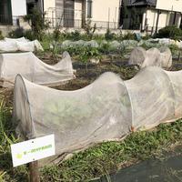 【E-MYFARM 区画No. 003】東京都世田谷区 きたからすやま農園野菜栽培区画