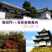 【2021/3/30】桜田門から皇居東御苑で桜も愛でる