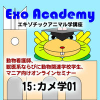 エキゾ学園:エキゾチックアニマル学講座:15 カメ学01