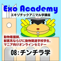エキゾ学園:エキゾチックアニマル学講座:08 チンチラ学