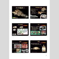 プライベートセミナー:爬虫類の臨床2018:カメの臨床Ⅰ(ハンドアウト)