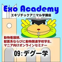 エキゾ学園:エキゾチックアニマル学講座:09 デグー学