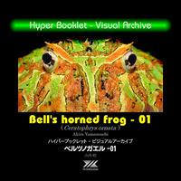 YILハイパーブックレット-ヴィジュアルアーカイブ「ベルツノガエル」