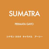 [SPICY] スマトラ ペルガタマヨ 深煎り