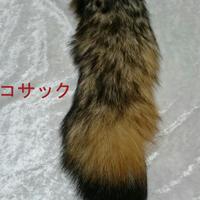 キツネの尻尾チャーム 6000