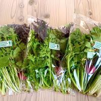 イマハ菜園  有機野菜サラダセット(店頭ピックアップ)