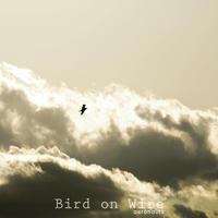 Bird on Wire / aeronauts