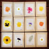 押し花メッセージカード《4枚セット》