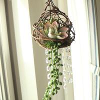 ハンギンググリーンのサンキャッチャー ~多肉植物の庭~