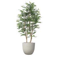 【EZ BARRIER GREEN 365】抗菌人工樹木 ハンドメイド トネリコ H210㎝(陶器鉢付)