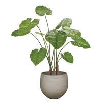 【EZ BARRIER GREEN 365】抗菌人工樹木 クワズイモ H100㎝(陶器鉢付)