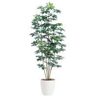 【EZ BARRIER GREEN 365】抗菌人工樹木 シェフレラ H180㎝