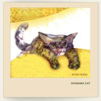 樹乃かに おひさまキャット OHISAMA CAT