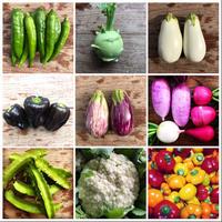 定期便 野菜セットS <2週間に1回コース>