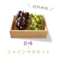【山梨フルーツBOX】(地元産 巨峰&シャインマスカット /愛情♡やまなし農産物パック)