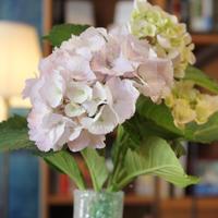 【花だより】胡桃堂の季節のお花(6月)