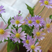 【花だより】胡桃堂の季節のお花