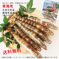 【送料無料】天草産活のイイ、甘い車海老500g(約20匹)