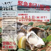 【緊急販売】夏のごちそう!天草岩牡蠣Mサイズ15個 6月5日までのご注文