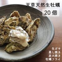 天草天然生牡蠣 20個
