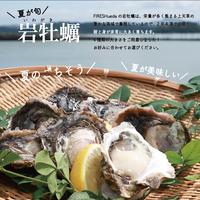 夏のごちそう!天草岩牡蠣(軍手・ハサミ付き)