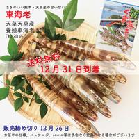 【送料無料 12/31到着】天草産活のイイ、甘い車海老500g(約20匹)