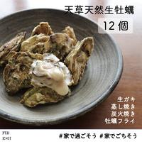 天草天然生牡蠣 12個