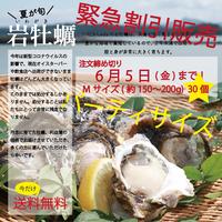 送料無料【緊急販売】夏のごちそう!天草岩牡蠣Mサイズ30個 6月5日までのご注文