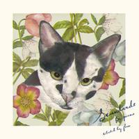 V.A. - Standards (CD)