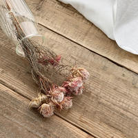 dry flower[SERRURIA BLUSHING BRIDE]